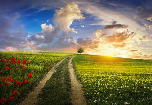 Фото бесплатно дерево, дорога, цветы