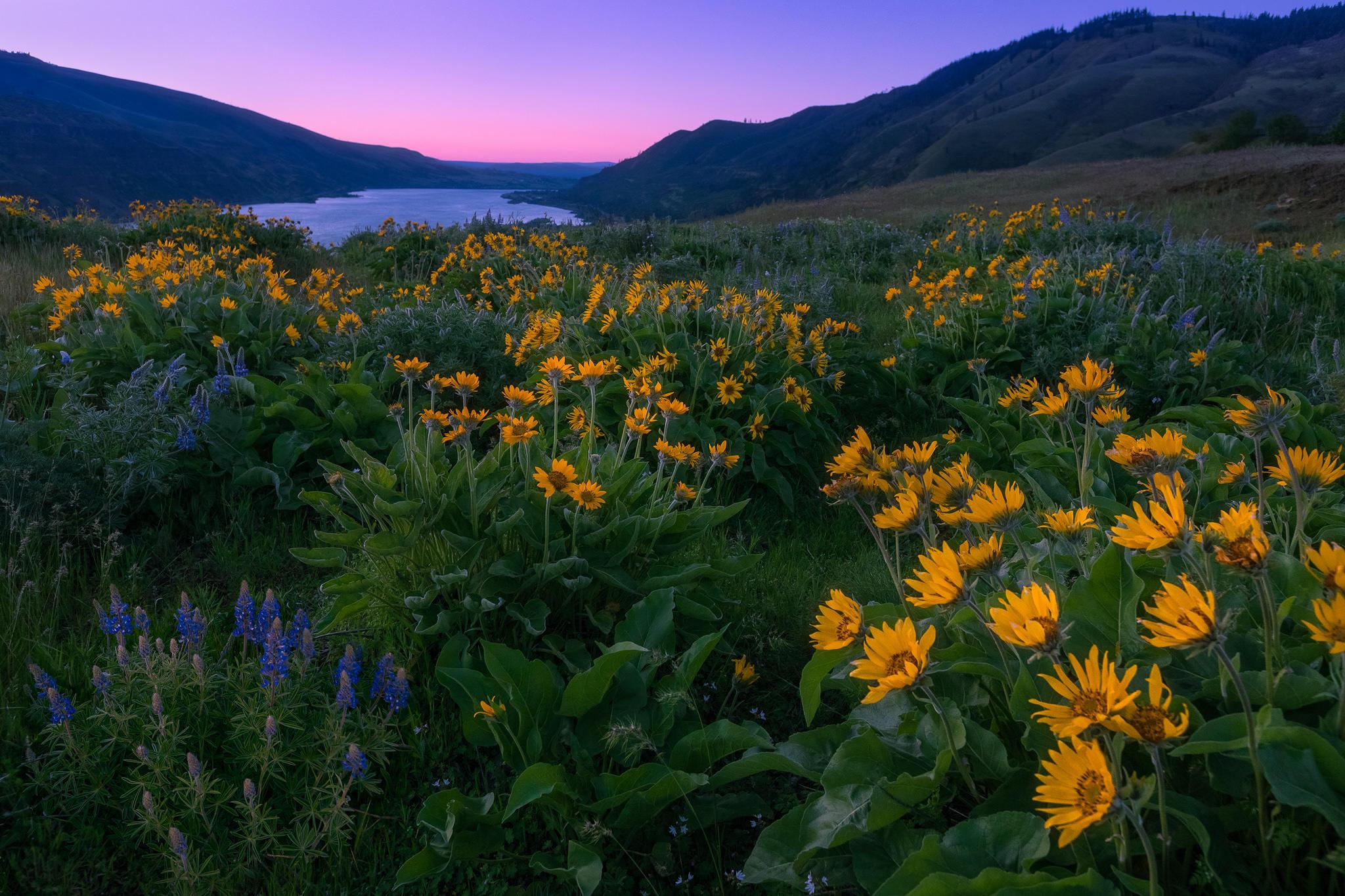 Обои Washington, Columbia River Gorge, закат, поле
