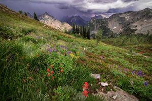 Фото бесплатно горы, цветы, деревья