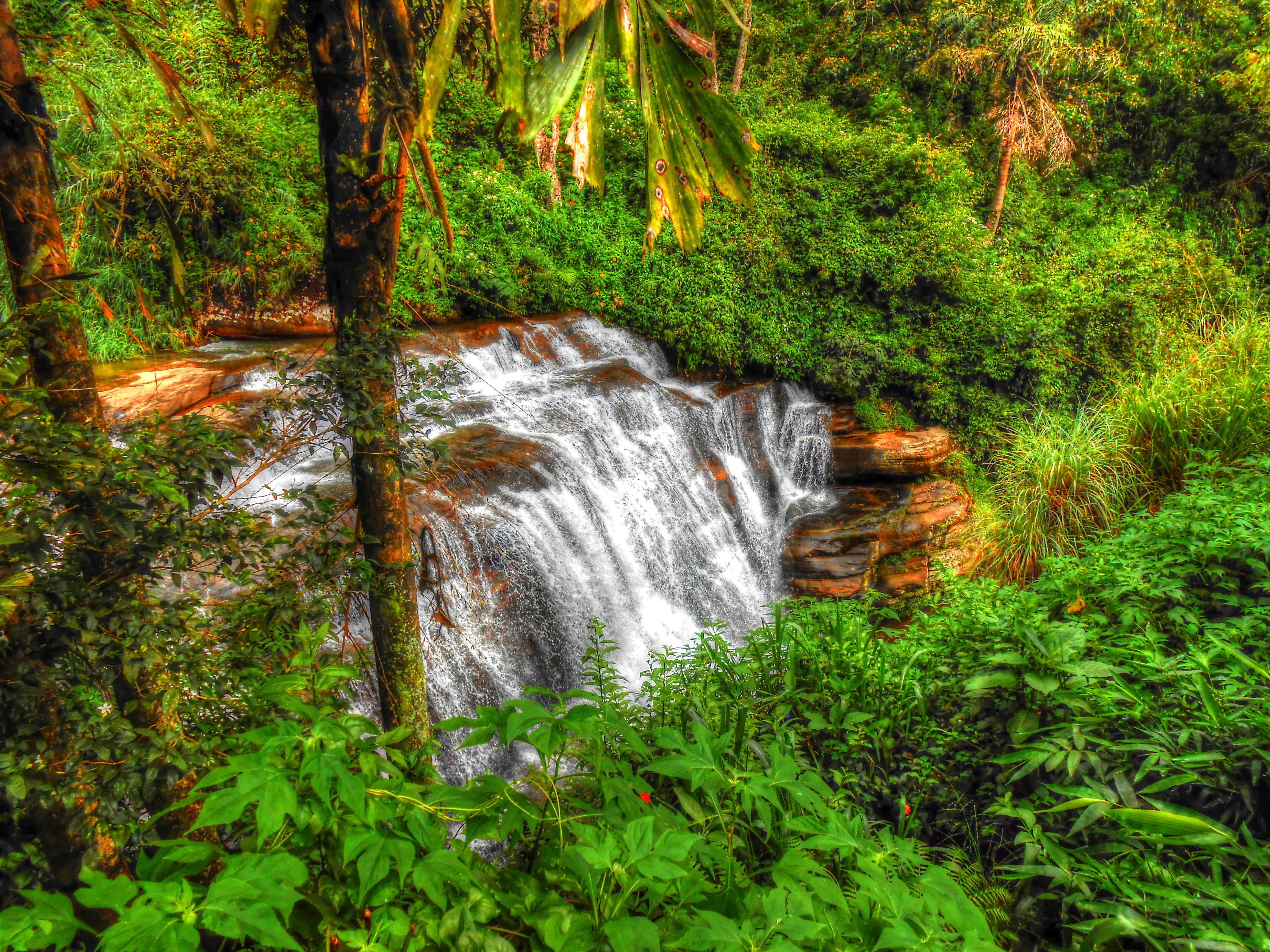 Обои лес, деревья, джунгли, Шриланка