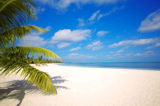 Заставка пляж, тропики на андроид