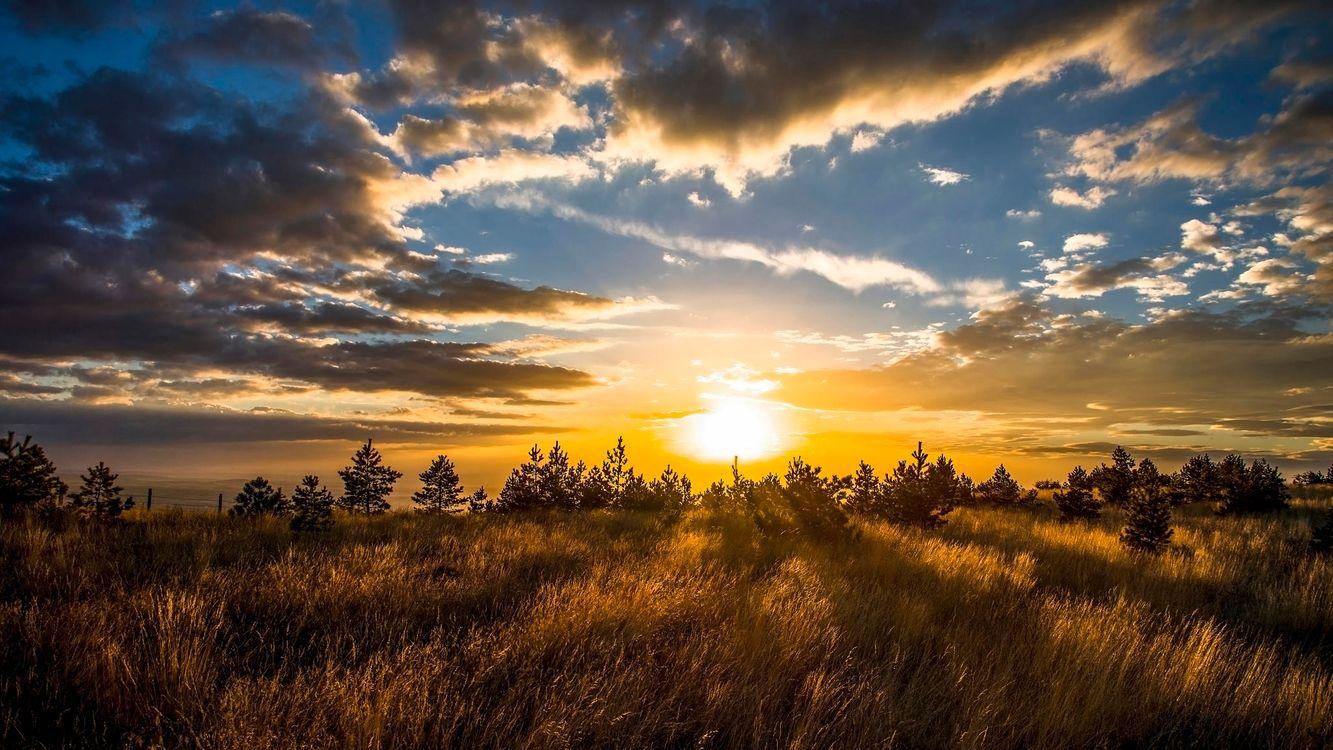 Фото бесплатно закат, поле, деревья, небо, облака, пейзаж, пейзажи