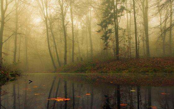 Фото бесплатно осень, деревья, утро