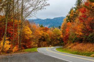 Обои Smoky Mountains National Park, Грейт Смоки Маунтинс Парк, штат Теннесси, осень, лес, деревья, дорога, пейзаж