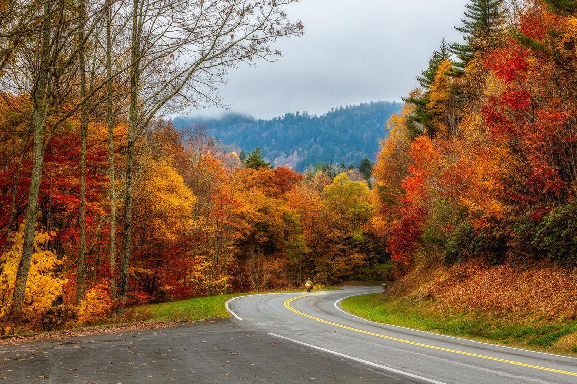 Обои Smoky Mountains National Park, Грейт Смоки Маунтинс Парк, штат Теннесси, осень, лес, деревья, дорога картинки на телефон