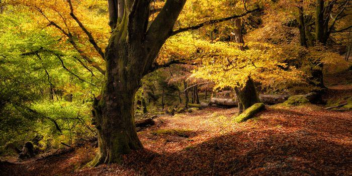 Photo free autumn, forest, trees