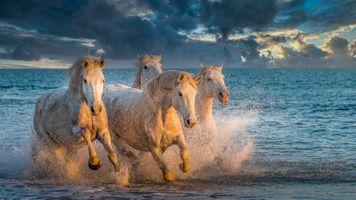 Фото бесплатно море, спрей, стадо
