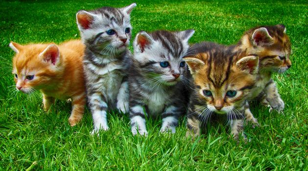 Photo free cats, view, cat