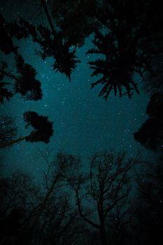 Ночной пейзаж и звезды
