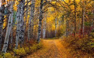 Фото бесплатно среда обитания, листья, ветвь