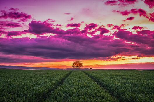 Фото бесплатно пейзажи, горизонт, дерево
