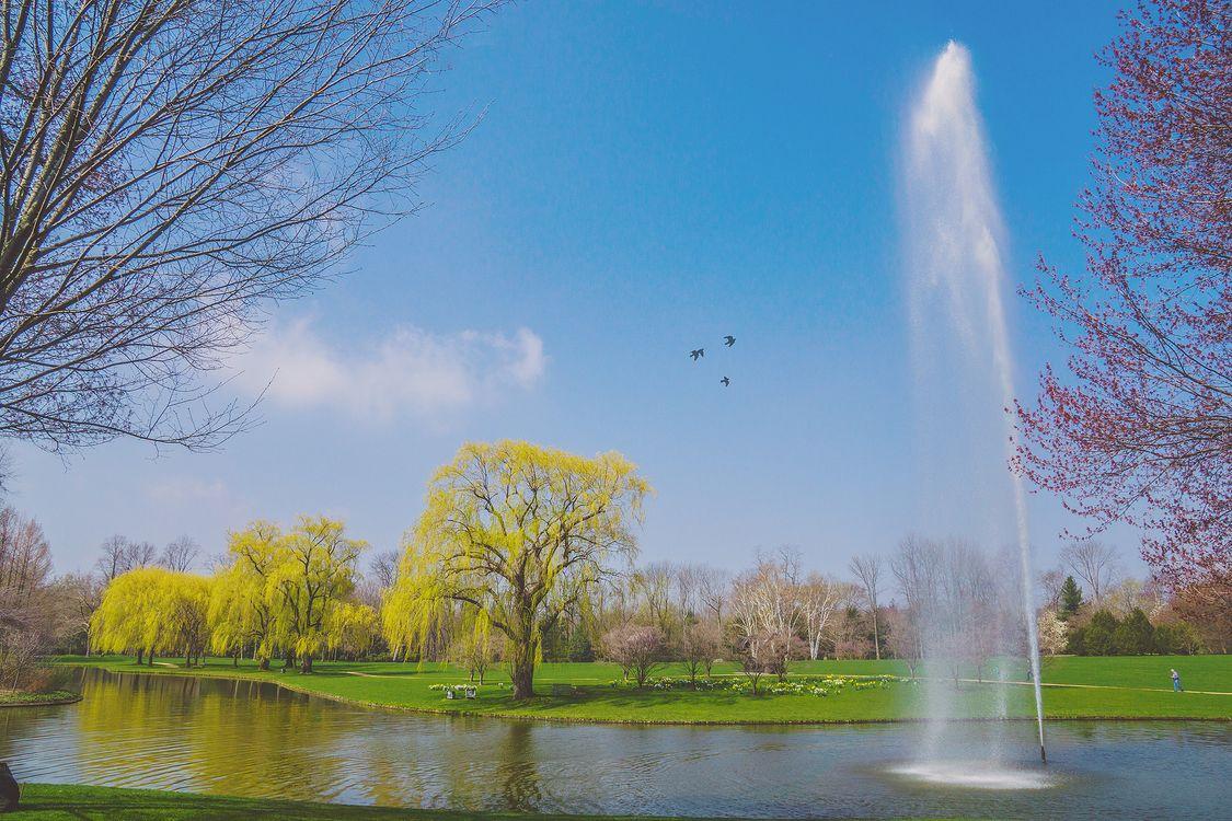 Фото бесплатно весна, парк, деревья, пруд, фонтан, поле, пейзаж, пейзажи