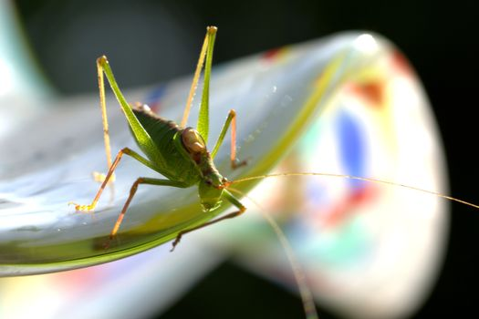 Photo free grasshopper, macro, insects