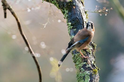 Фото бесплатно птицы, мох, ветви