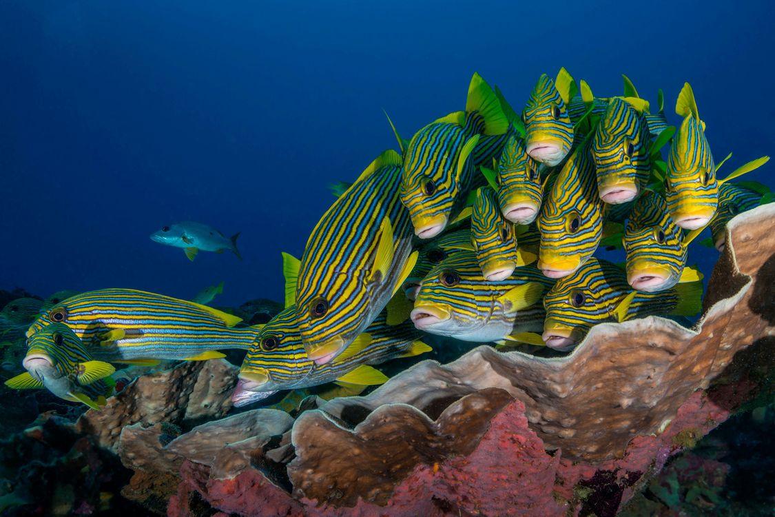 Фото бесплатно Индонезия, рыба, подводный мир - на рабочий стол