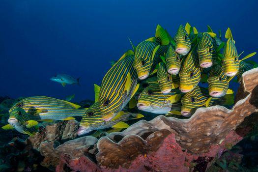 Фото бесплатно Индонезия, рыба, подводный мир