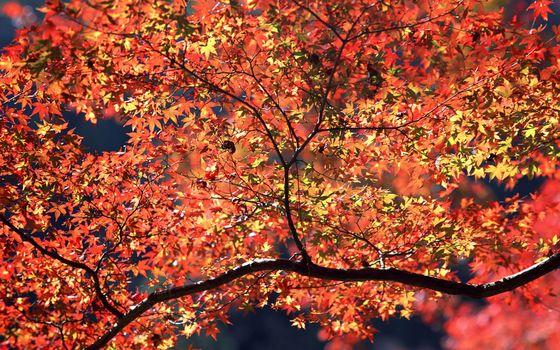 Photo free branches, landscapes, autumn