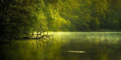 Бесплатные фото озеро, деревья, закат, природа