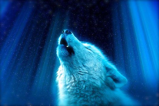 Фото бесплатно Белый Волк, вой, величественный