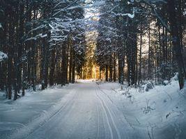 Бесплатные фото winter,snow,road,trees,зима,снег,дорога