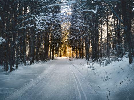 Бесплатные фото winter,snow,road,trees,зима,снег,дорога,деревья