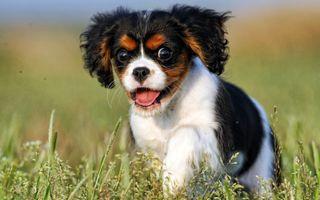 Фото бесплатно собака, вид, щенок