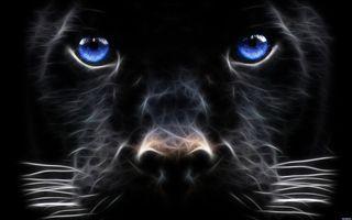 Фото бесплатно иллюстрация, кошка, животные