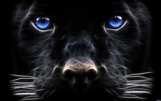 Photo free illustration, cat, animals