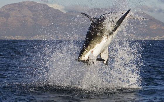 Фото бесплатно млекопитающее, море, акула