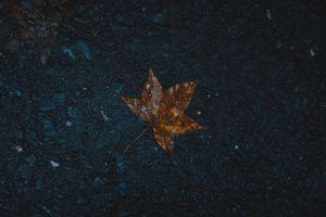 Фото бесплатно лист, мокрый, клен