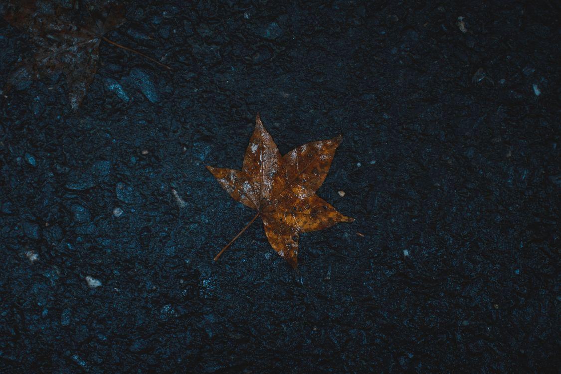 Картинка лист, мокрый, клен, leaf, wet, maple на рабочий стол. Скачать фото обои природа