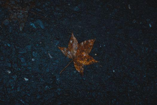 Бесплатные фото лист,мокрый,клен,leaf,wet,maple