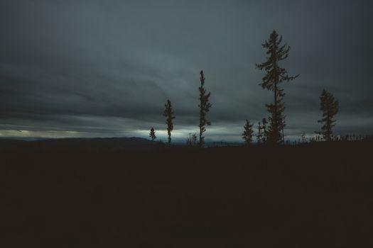 Заставки деревья,вечер,небо,горизонт,trees,evening,sky,horizon