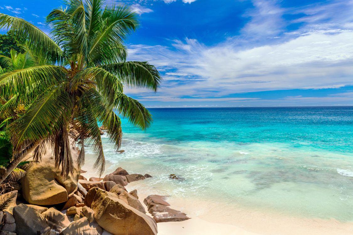 Картинка тропики, море, пляж на рабочий стол. Скачать фото обои пейзажи