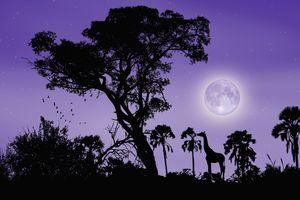 Фото бесплатно ночь, луна, силуэты