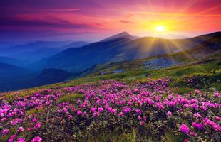 Бесплатные фото закат,горы,цветы,пейзаж
