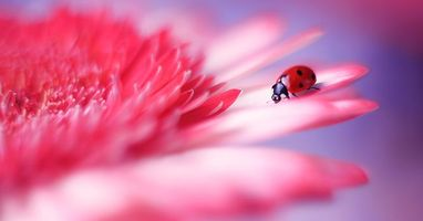 Photo of ladybug on flower desktop