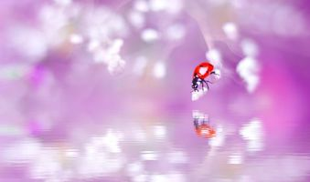 To download the wallpaper ladybug flower desktop free