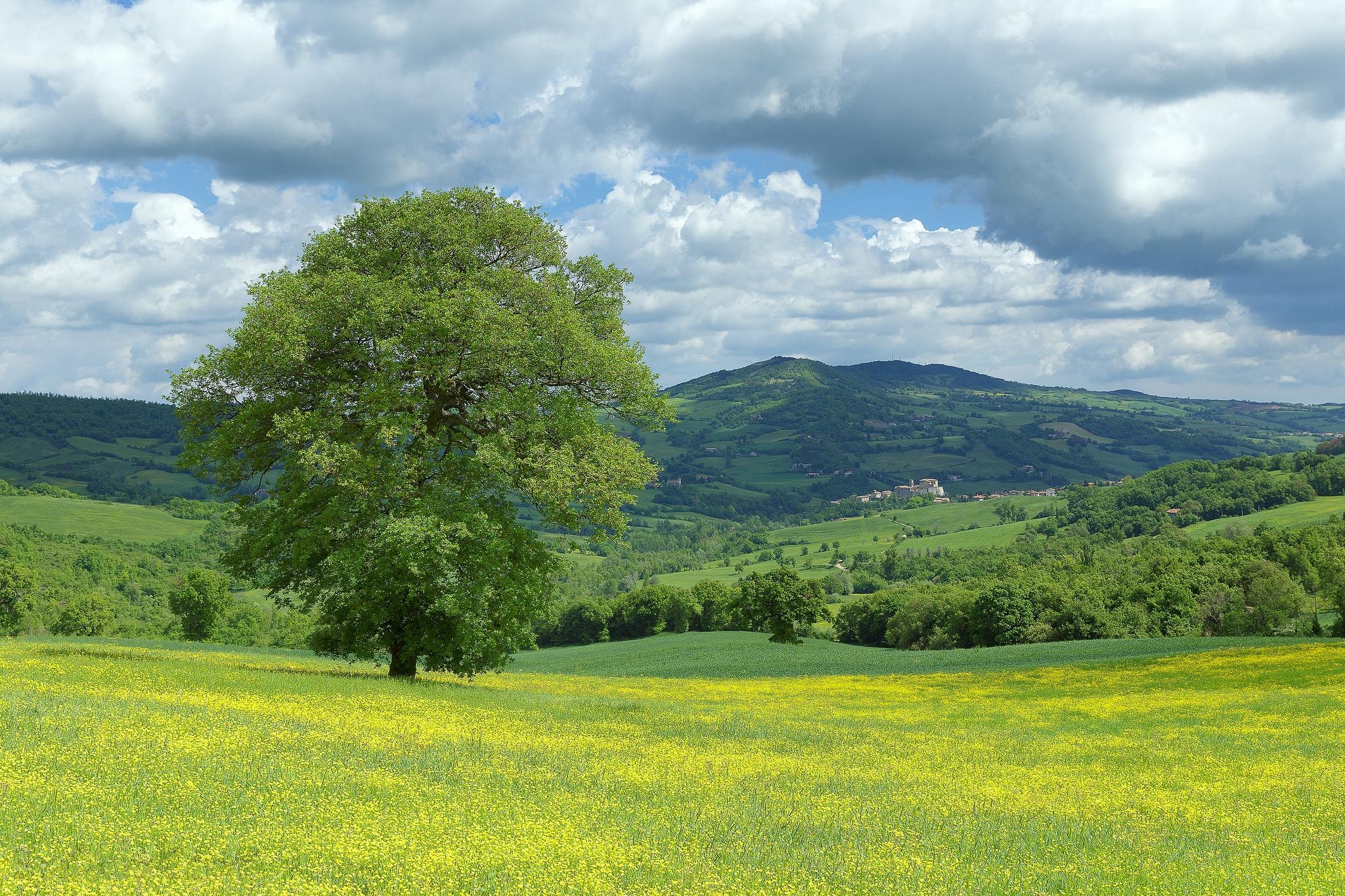 Обои Monte Cerignone, Марке, Италия, поле