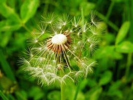 Фото бесплатно стебель растения, фотографии, ботаника