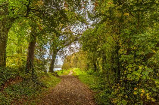 Фото бесплатно природа, Ирландия, путь