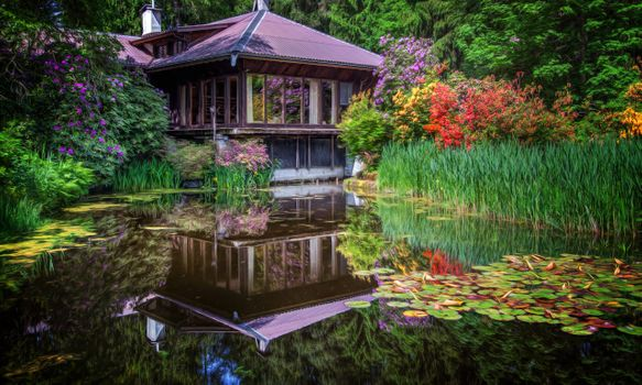 Photo free pond, park, water lilies