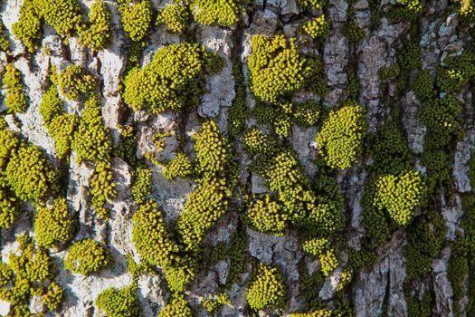 Photo free vegetation, non vascular land plant, texture