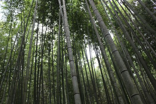 Photo free forest, trunks of trees, bamboo tree