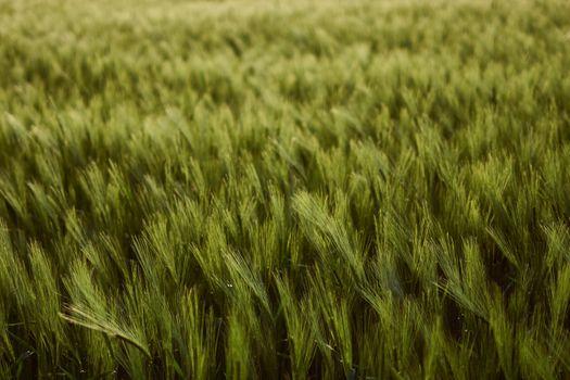 Фото бесплатно зеленые растения, поле, размытый фон