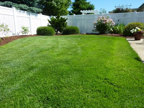 Photo free colorful, lawn, green