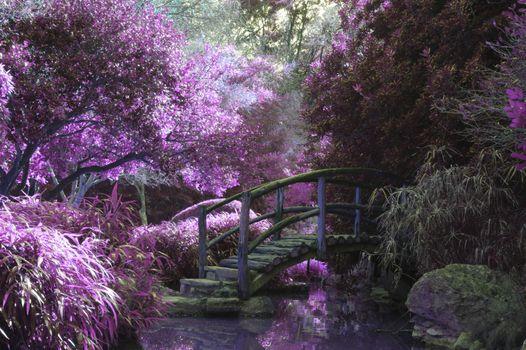 Фото бесплатно флора, мост, ветвь