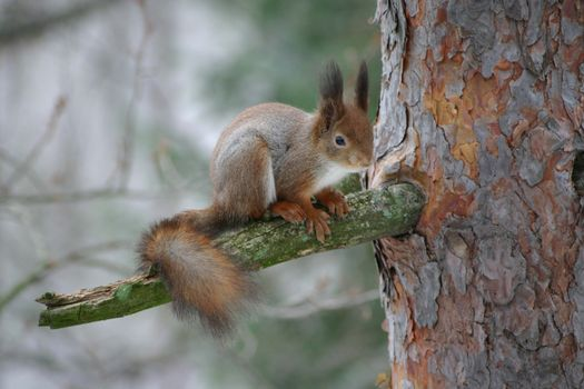 Photo free nature, squirrel, wood