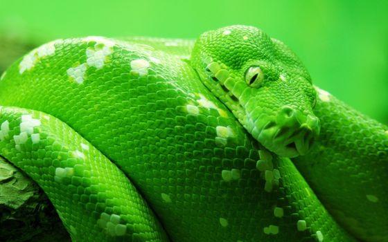 Фото бесплатно змея, зеленая, пятна