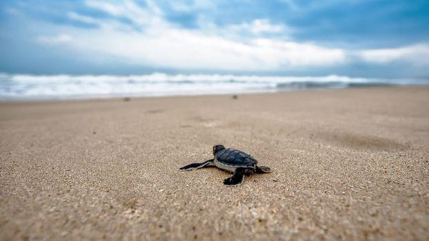 Фото бесплатно черепаха, пляж, океан